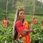 The Financial Crisis and Gender: Assessing Changes in Workforce Participation for Rural India